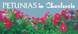 Charlevoix Petunias